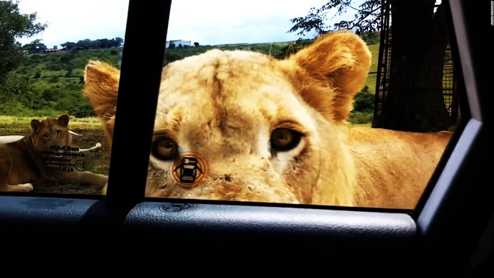 Лав отвора врата од возило
