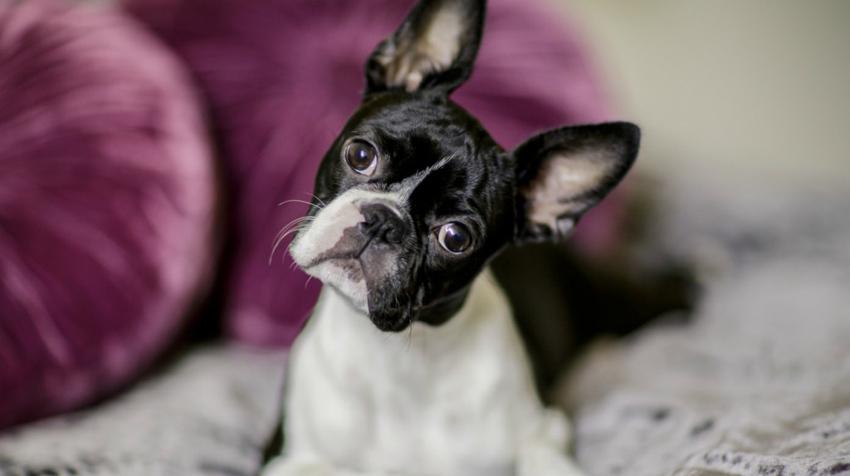 Науката потврдува  Зошто секогаш треба да му се насмевнувате на вашето куче